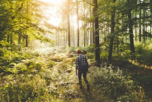 a-walk-through-the-woods-benjamin-bergh-photography-580x390